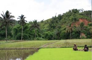 Campos de Arroz en Madagascar