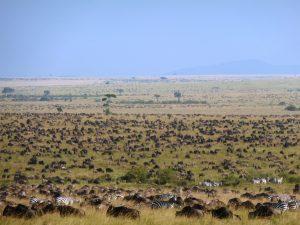 0029 La gran migración en el PN Serengeti. Tanzania
