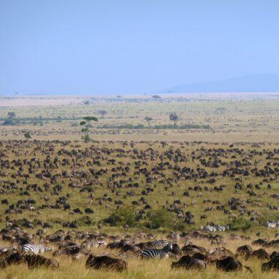 La gran migración en el PN Serengeti. Tanzania