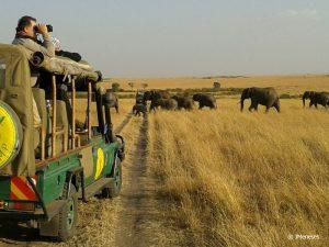 elefantes masai mara