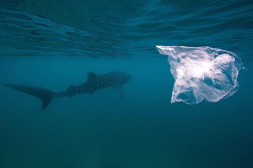 Las bolsas de plástico contaminan especialmente los ecosistemas marinos