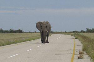 Elefante en la carretera Botswana