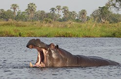 botswana-mobile-safari