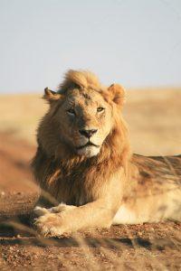 blog-kananga-rey-leon
