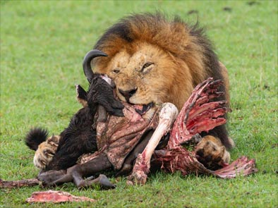 safarifotografico