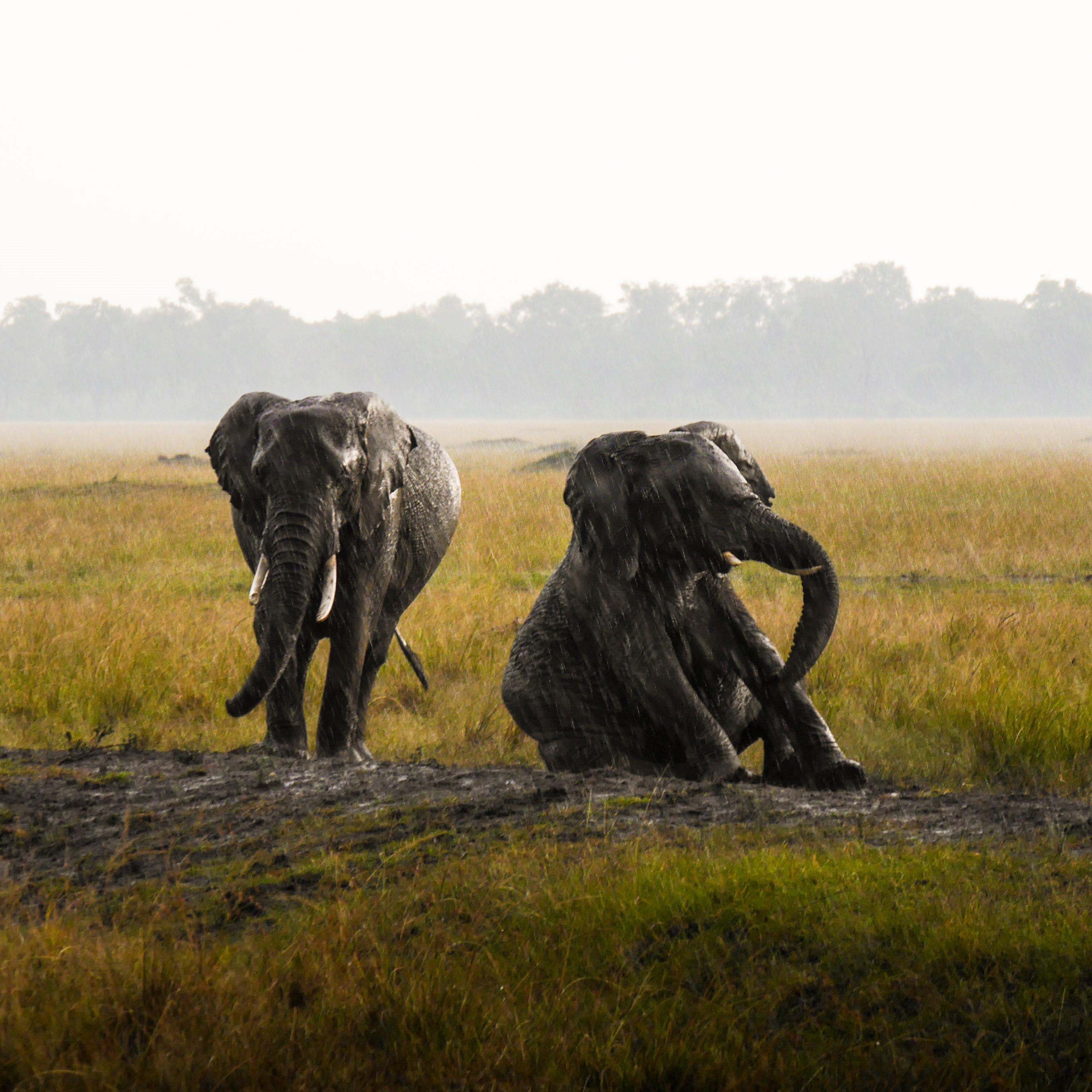 Memorias de África Clásico